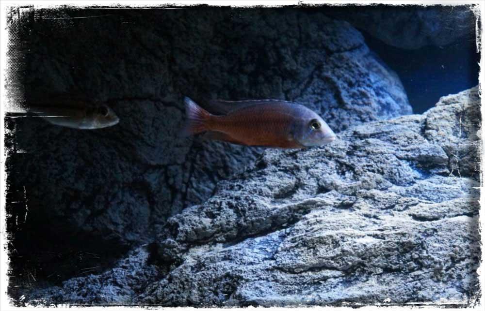 ARSTONE skály do akvária 3D