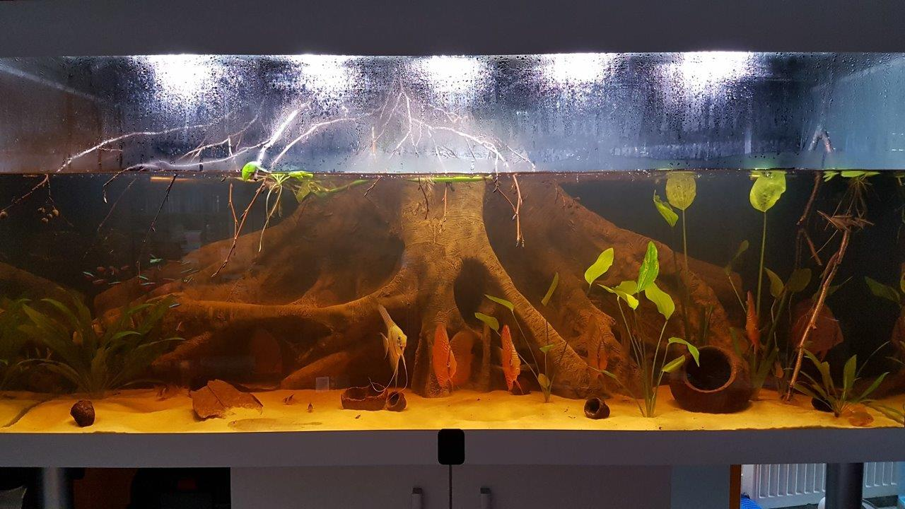 Scalars and discusfish aquarium