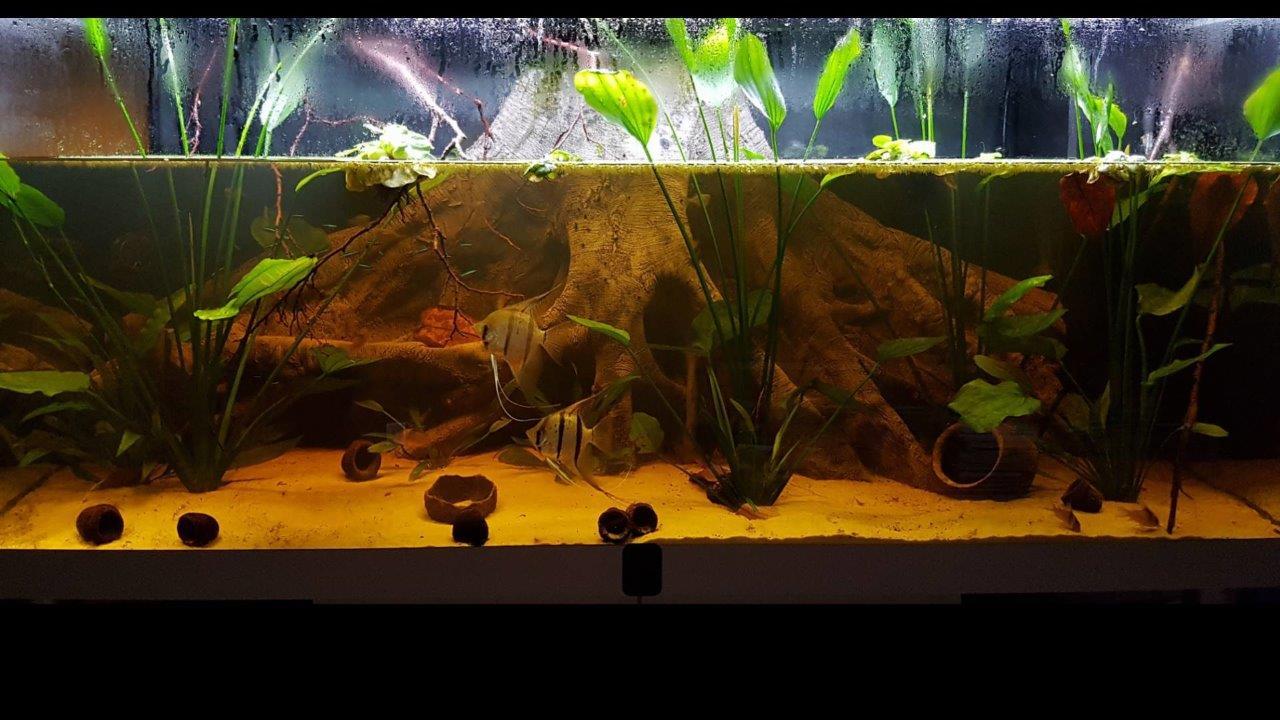 The aquarium at night