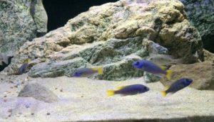 Modul M1 im Aquarium