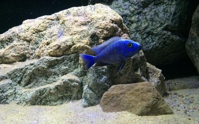 Kunstfelsen von ARSTONE im Aquarium