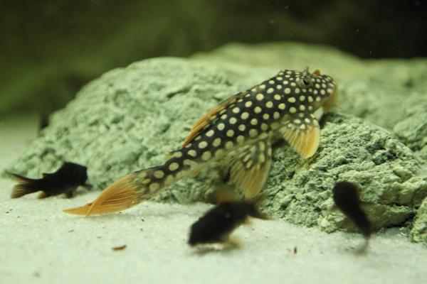 The fish like ARSTONE modules