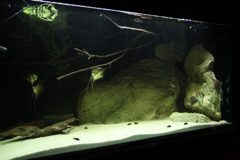 Larger rocks in the aquarium tank
