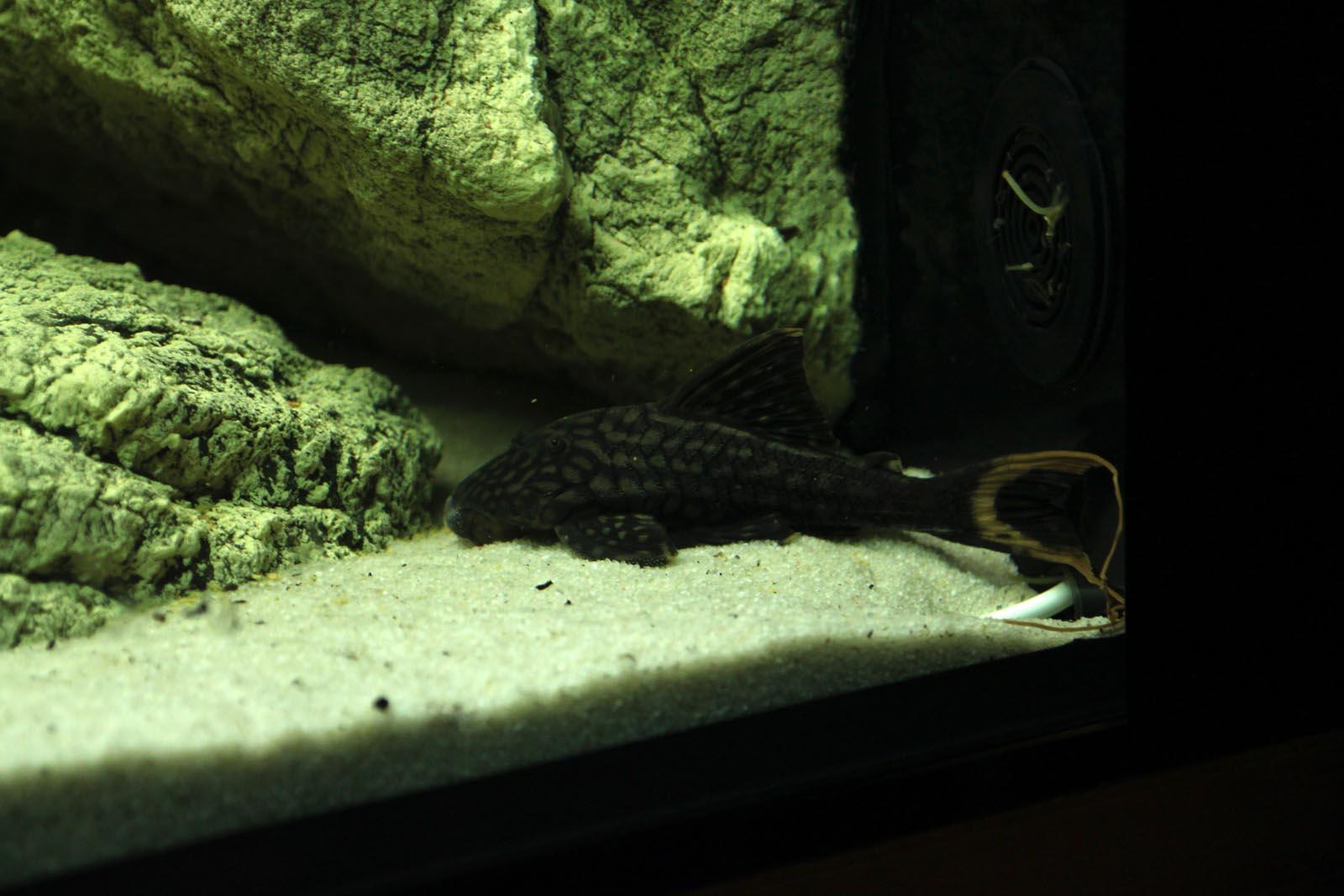 Rock modules in the aquarium