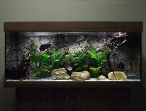 Sumatra achterwand in het aquarium