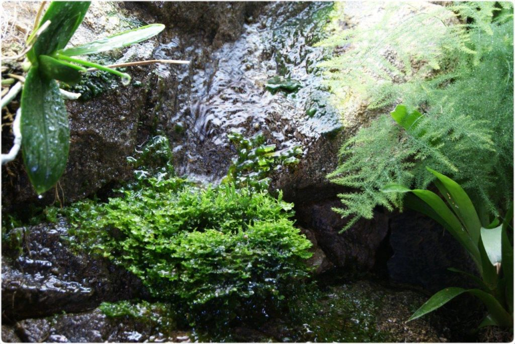 Krásný vodopád v teráriu