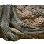 Amazonas Aquarium Rückwand mit Wurzel