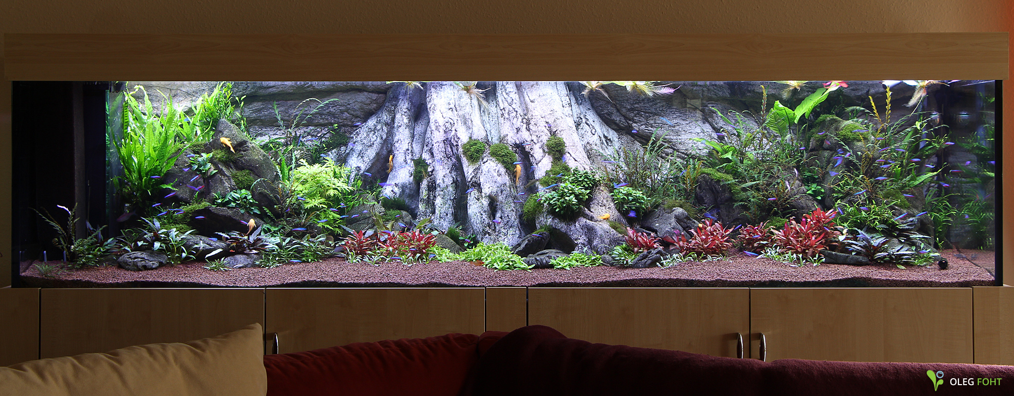 Amazonas XL in het enorme aquarium