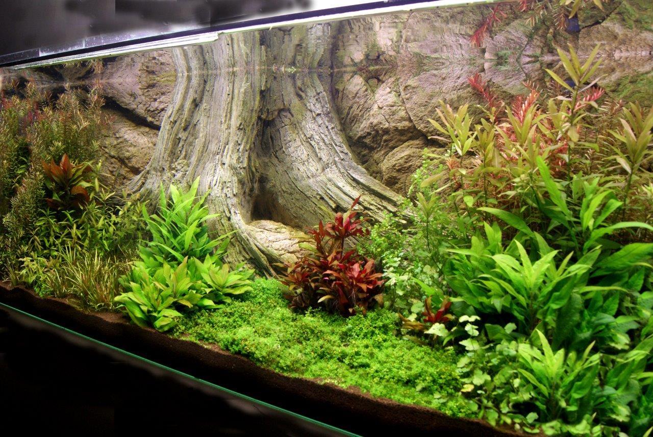 Het aquarium kort na de installatie
