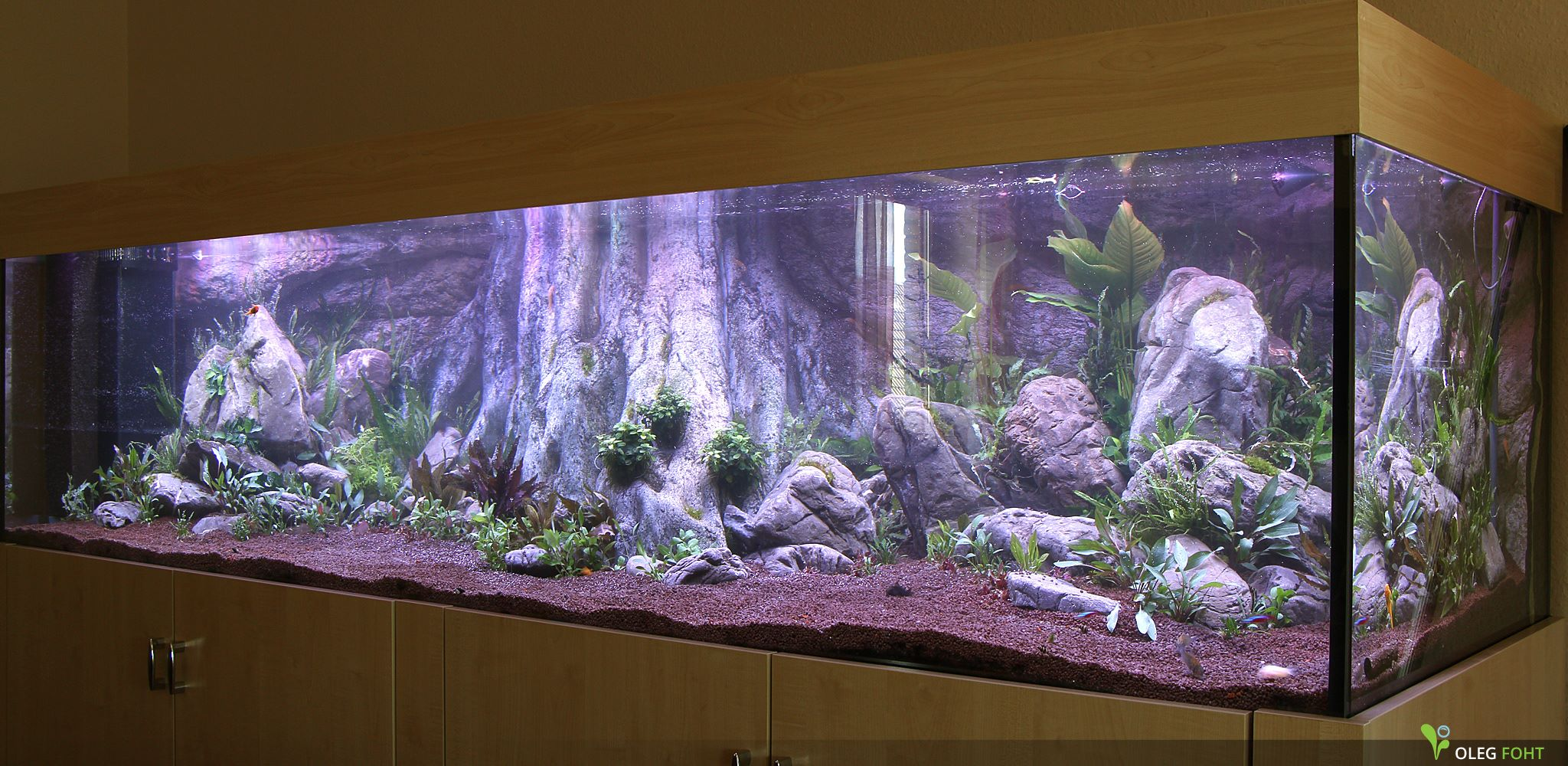 Amazonas XL aquarium background