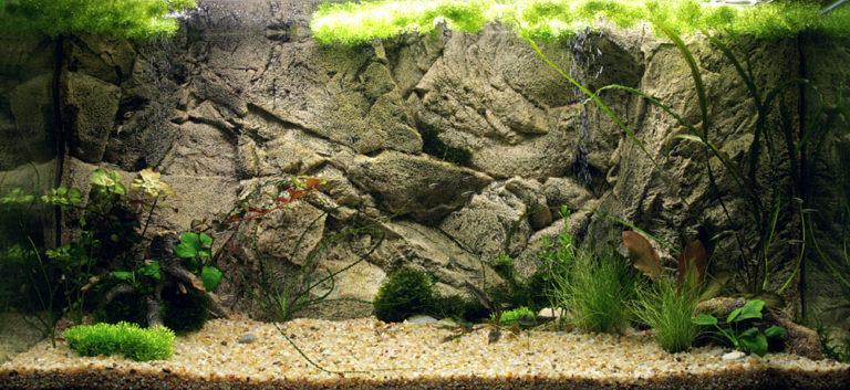 Borneo v akváriu
