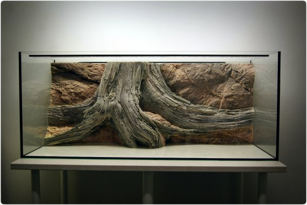The tank with the background