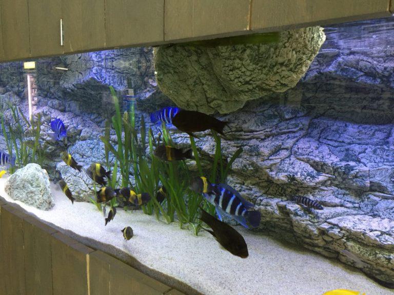 Kameny ARSTONE jsou ideální pro Tanganjika akvárium