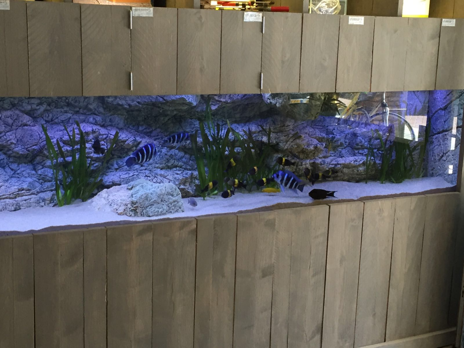 Alimar in the aquarium tank
