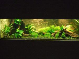 Kerala aquarium background in the Dutch tank