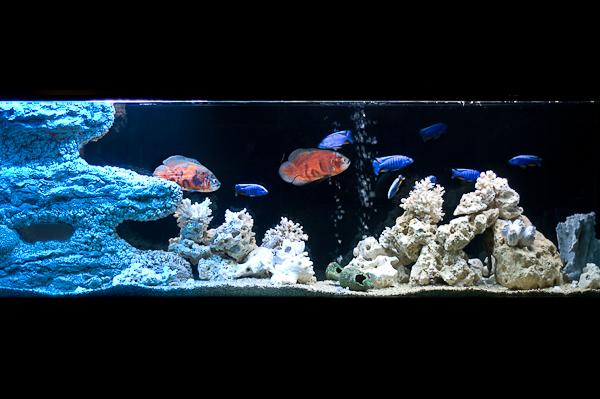 Saltwater aquarium design arstone aquarium backgrounds for Marina aquarium