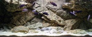Rocky Aquarium