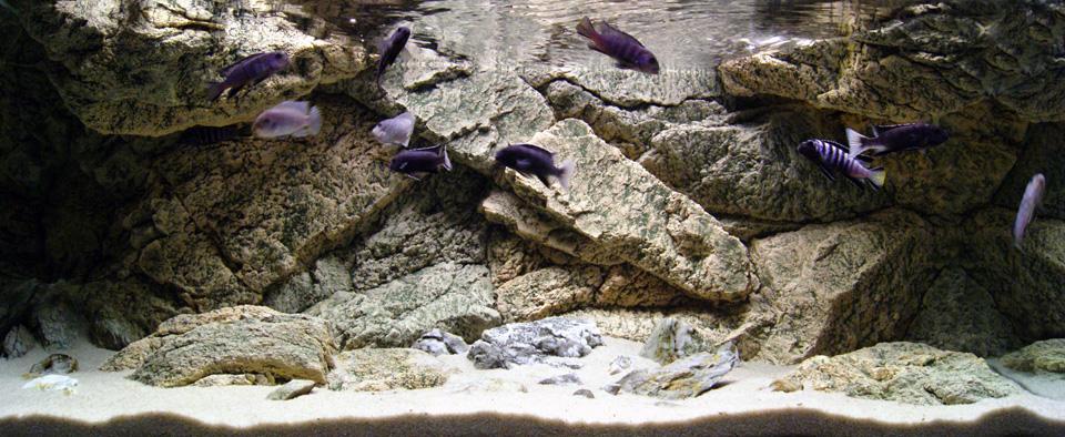 Rocky achterwand in het aquarium