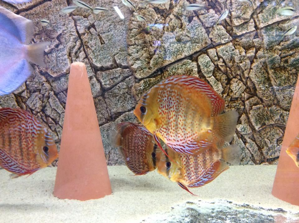 Slimline achterwand in het aquarium