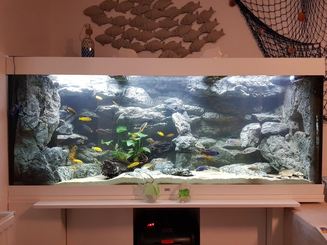 Alimar and Slimline XL backgrounds in Malawi Tank