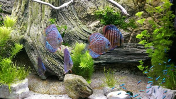 Amazone aquarium achterwand