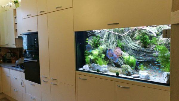 Amazonas pozadí v akváriu
