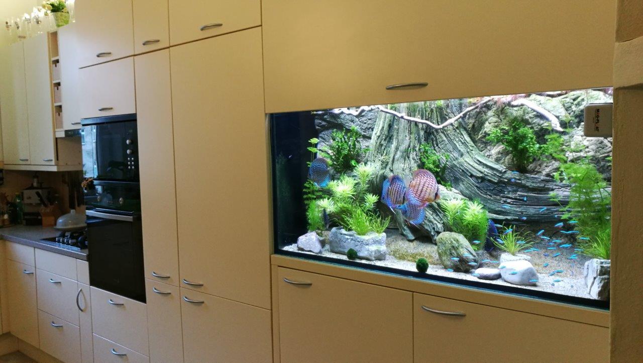 het ingebouwde aquarium in de keuken