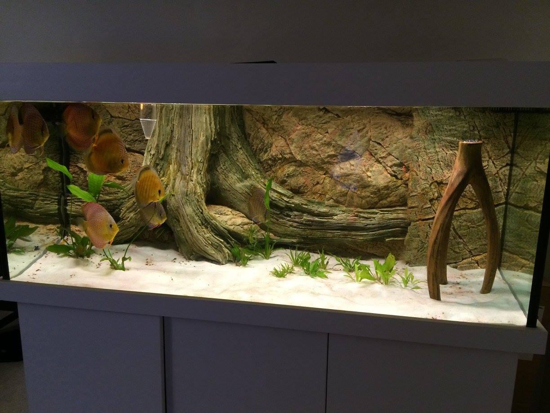 Diskus manolo aquarium arstone aquarium r ckw nde for Diskus aquarium