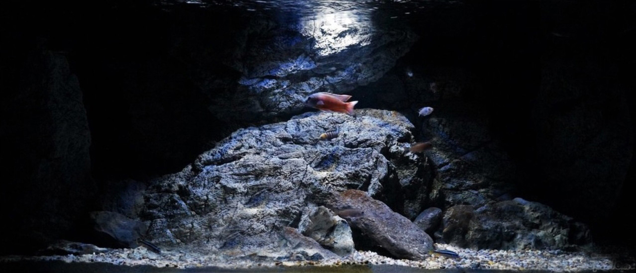 Mysterious Malawi tank with ARSTONE 3D aquarium rocks