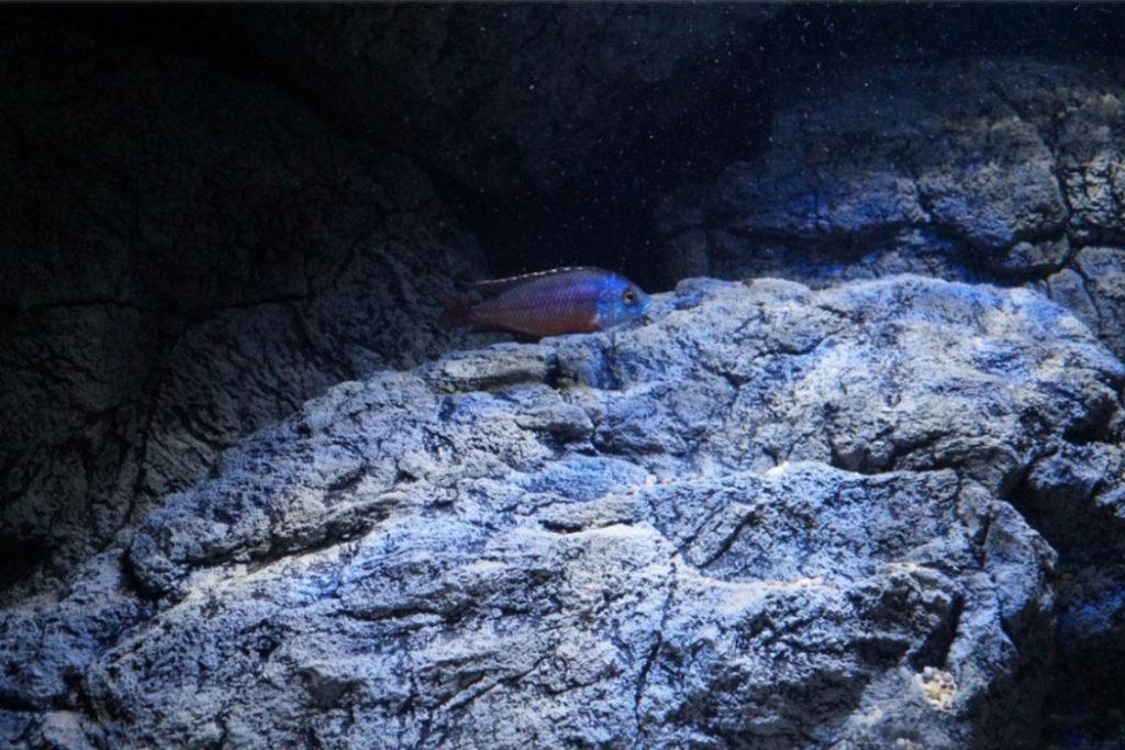 Aquarium rotsen zien er zo prachtig uit