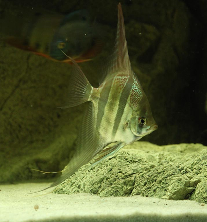 3D Rocks in the aquarium tank