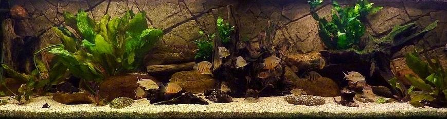 Slimline Basalt Gneiss 200x60 cm in het aquarium