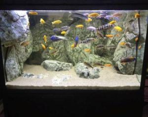 Weiße Kalkstein Module in Malawi Aquarium