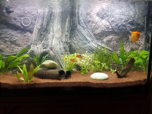 Amazonas 3D aquarium background by ARSTONE photo review