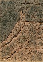 Basalt Gneiss