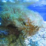 Red Sea 3D Korallen Rückwand für Salzwasseraquarien