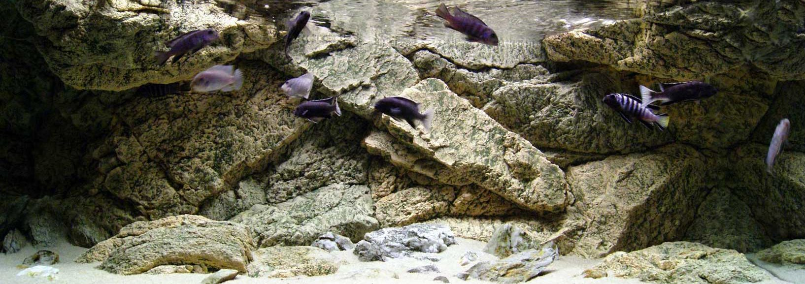 Rocky 3D aquarium backgrounds