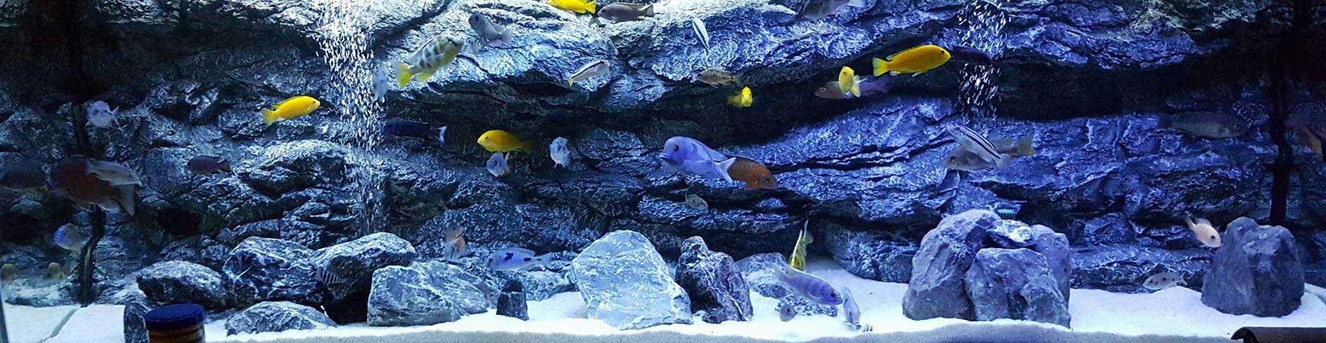 Alimar Alpenkalk Background In The Aquarium