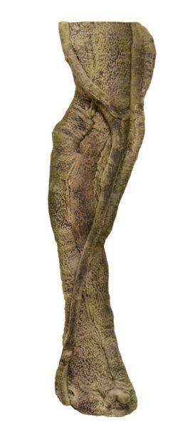 Rainforest Root 1 - 19 x 70 cm