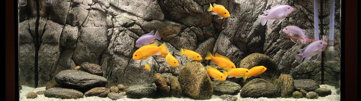 Borneo aquarium Background