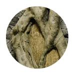 Aquarium Root