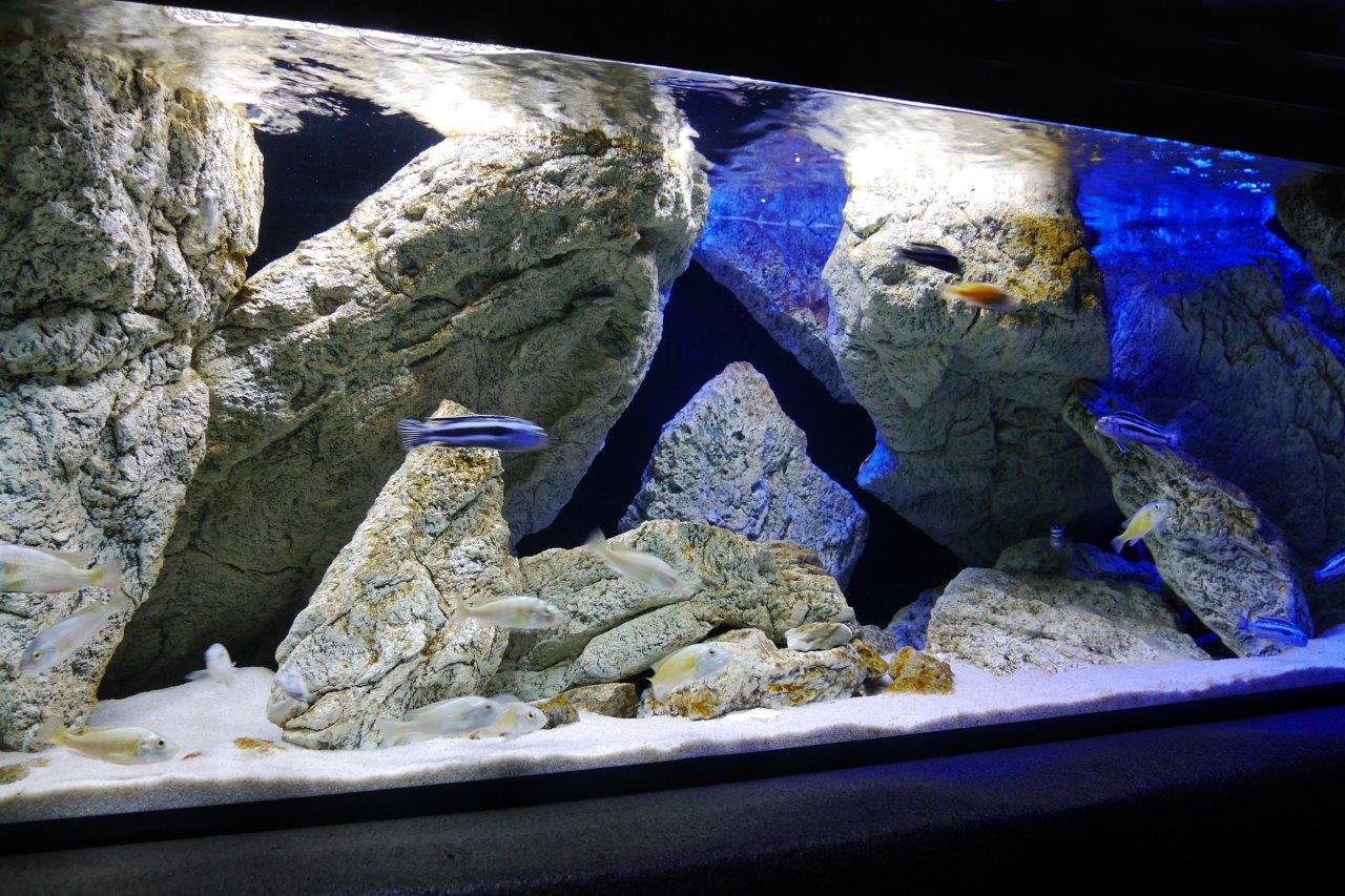 Malawi cichlid aquarium with ARSTONE modules