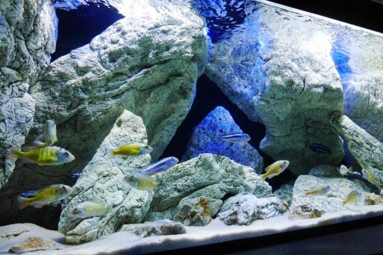 Malawi akvárium s umělými kameny a tlamovci