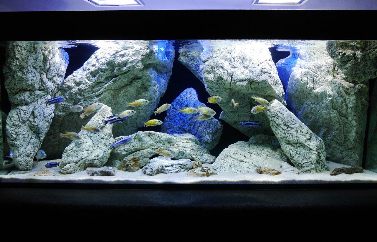 Malawi aquarium und ARSTONE modules