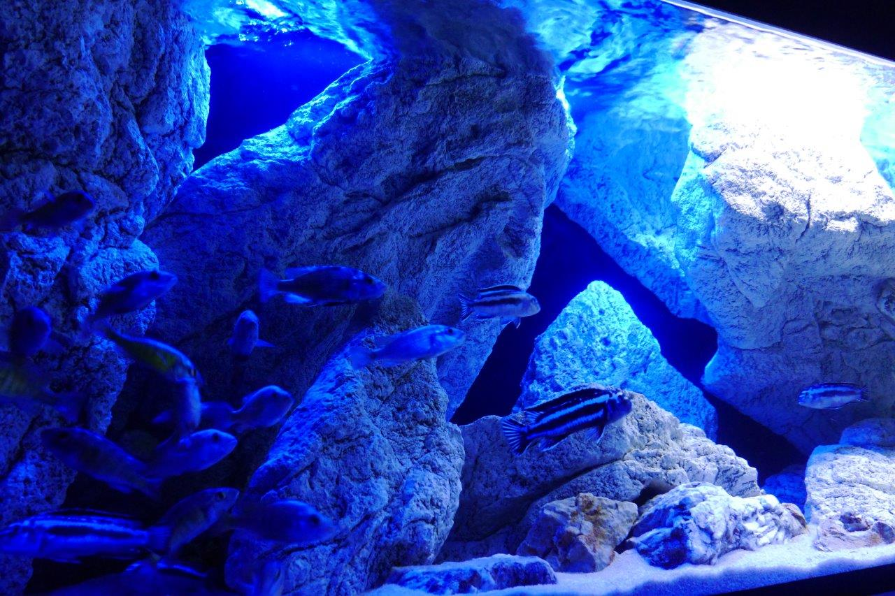 aquarium rotsen blauwe LED