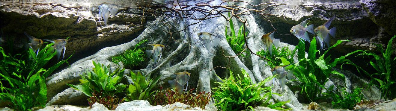 Amazonas XL aquarium achterwand met scalaren
