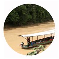 Aquarium Rückwände für Amazonas biotope