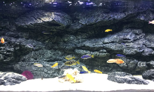 Alimar 3D Aquarium Rückwand von ARSTONE photo review